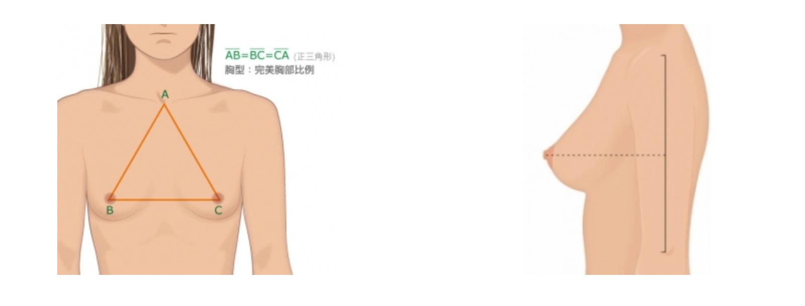 完美胸部示意图